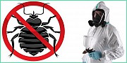 Уничтожение тараканов, блох, клопов, крыс и мышей. Одесса