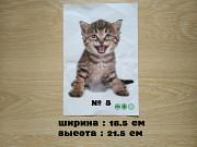 Наклейка котик номер 5 для ванны, детской комнаты <b>Доставка з м. Бориспіль</b>