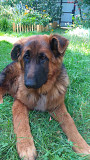 Вушні вставки для собак из г. Киев