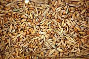 Закуповуємо некондицію, зерновідходи, зернові та бобові культури Киев