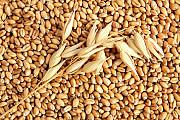Куплю зернові, бобові, некондицію, зерновідходи. Полтава