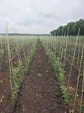 Polyarm опоры и колышки для растений из г. Кременчуг