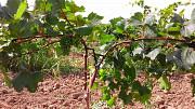 Опоры и колышки для растений из композитных материалов Polyarm из г. Тернополь