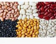 Фасоль в продаже разные сорта Полтава