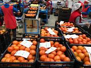 Продаем томаты из г. Киев