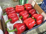 Продаем перец Киев