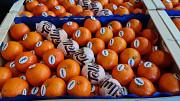 Предлагаем оптовые поставки мандаринов из г. Киев