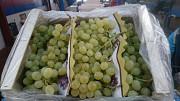 Предлагаем оптовые поставки винограда из г. Киев