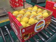 Предлагаем оптовые поставки лимона из г. Киев