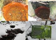 Заричевская минерал 10-14 г/л гидрокарбонат. Кальций. углекислая тип Е Киев