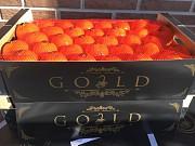 Продаем мандарины из Испании Киев