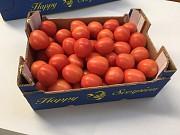 Продаем томаты из Испании Київ