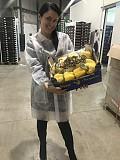 Продаем перец из Испании Київ