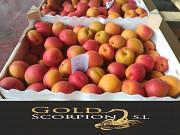 Продаем абрикос из Испании Киев