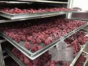 Инфракрасный промышленный сушильный шкаф Фермер-2040 доставка из г.Днепр