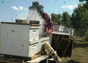 Пчелиное Маточное Молочко Днепр