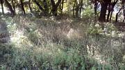 Уборка участков,огородов,территории Донецк Донецк