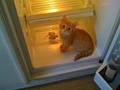 Холодильники РЕМОНТ