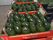 Продаем авокадо из Испании Киев