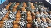 Продаем ананас из Испании
