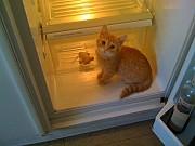 РЕМОНТ холодильники Харків