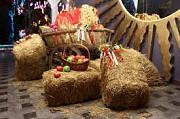 Доставка пшеничной Соломы в тюках по Запорожью. Запорожье
