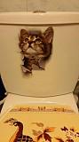 Наклейки котики для детской комнаты из г. Борисполь